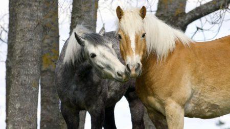 tenderness, horse, tree
