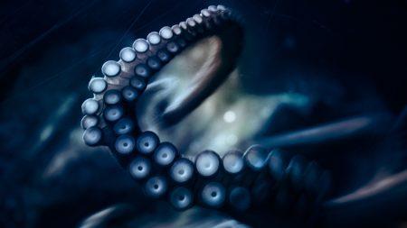 tentacles, movement, suckers