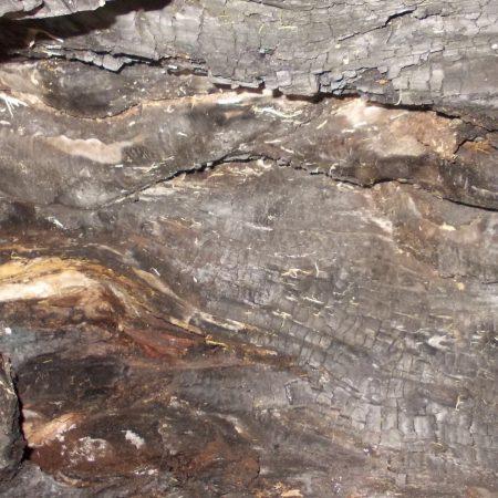 texture, bark, wood