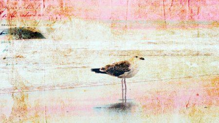 texture, images, birds