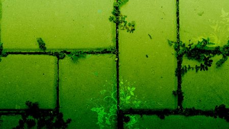 texture, plants, green