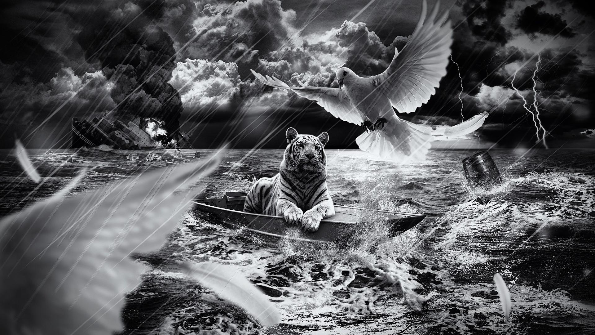 tiger, boat, sailing