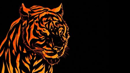 tiger, line, graph