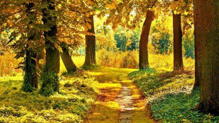 track, trees, vegetation