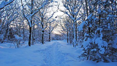 track, winter, snow