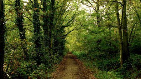 track, wood, dense