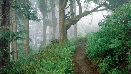 track, wood, fog
