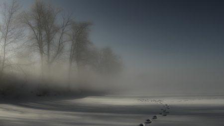 tracks, fog, snow