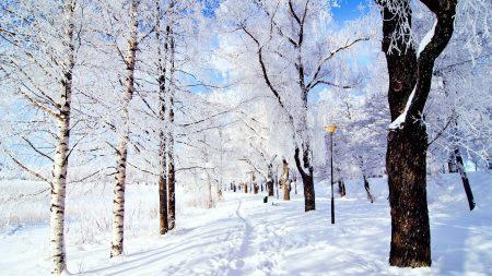 trail, trees, snow