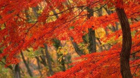 tree, autumn, trunk