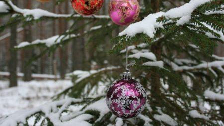 tree, branch, snow