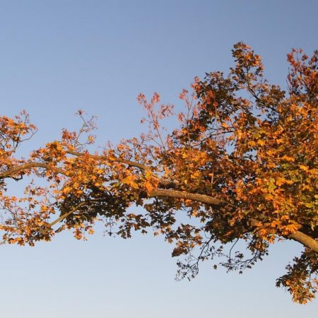 tree, branches, autumn