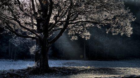 tree, branches, beams