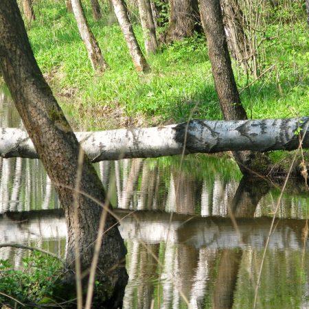 tree, bridge, river