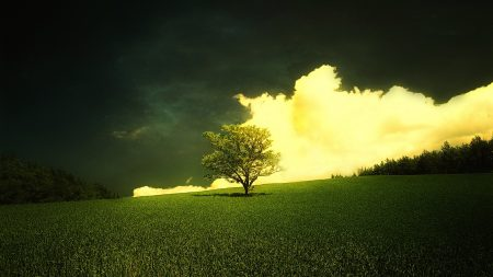 tree, bush, lonely