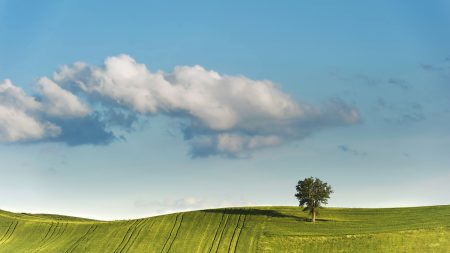 tree, clouds, hill