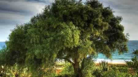 tree, coast, sea
