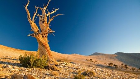 tree, dead, desert