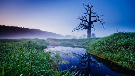 tree, dead, stream