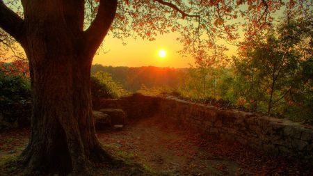 tree, decline, evening