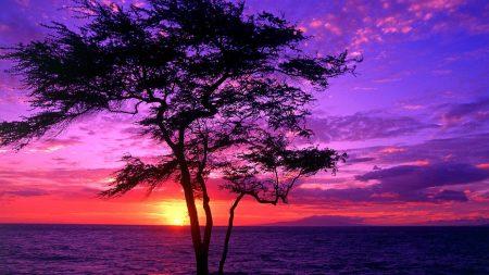 tree, decline, sea