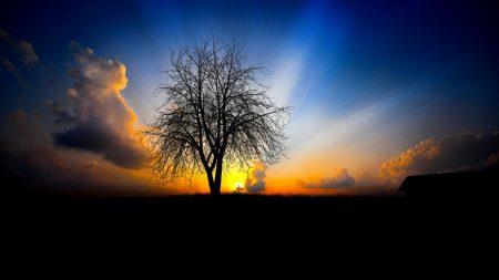 tree, evening, decline