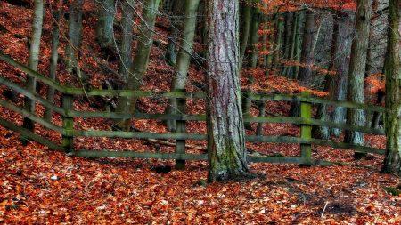 tree, fence, autumn