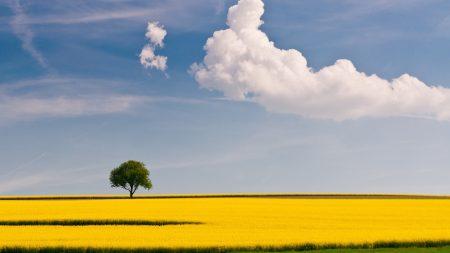 tree, field, cloud