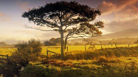 tree, field, fence