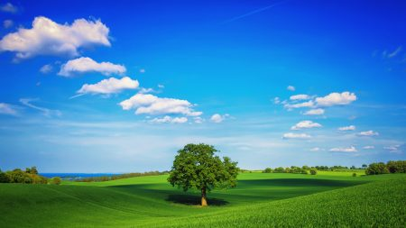 tree, field, plain