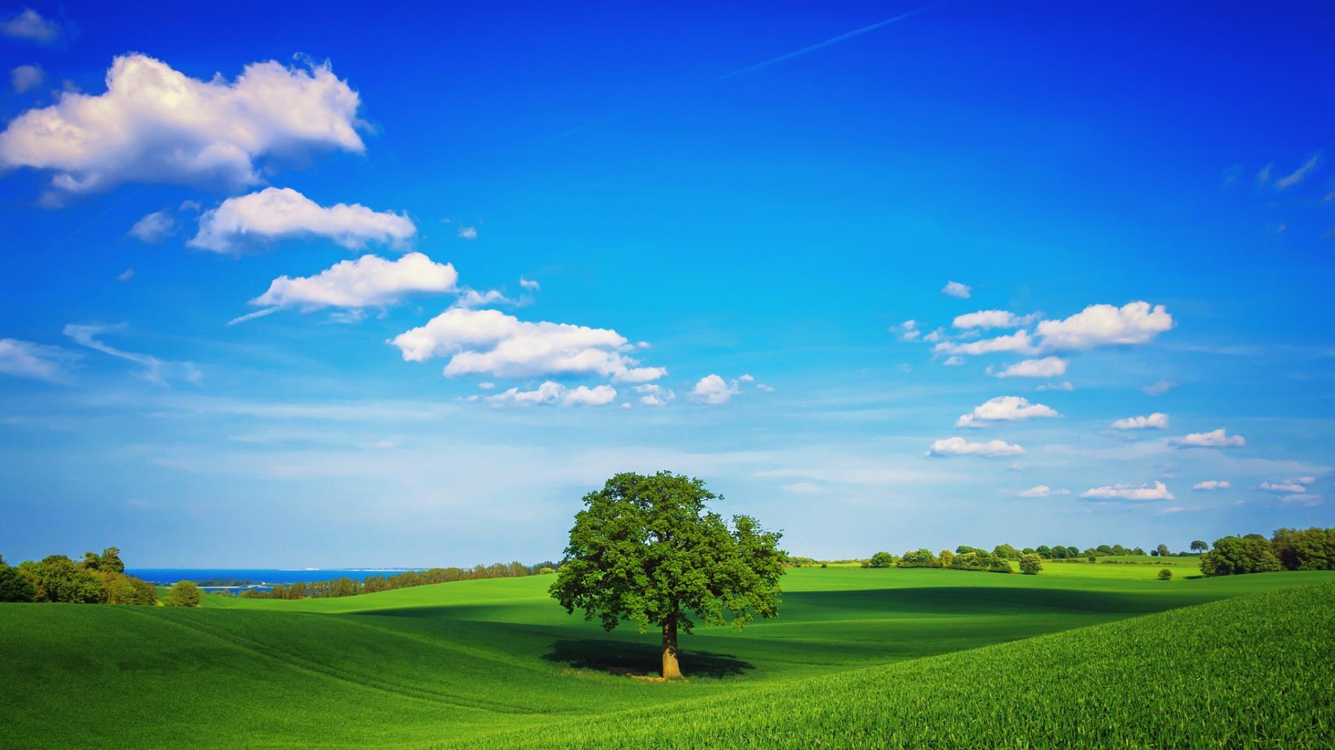 download wallpaper 1920x1080 tree  field  plain  green birch tree vectors free birch tree silhouette vector