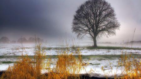 tree, first snow, autumn