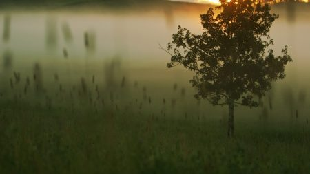 tree, fog, morning