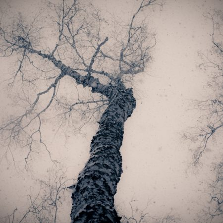 tree, gloomy, from below