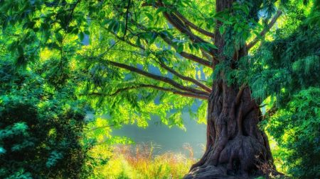 tree, grass, light