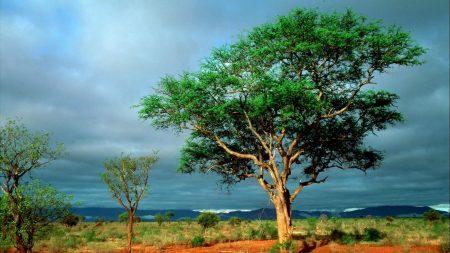 tree, grass, sky
