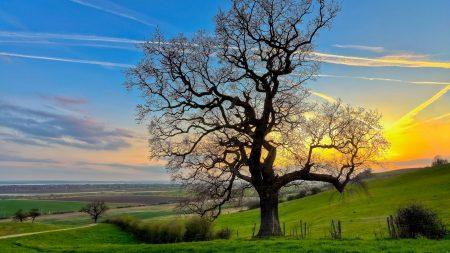 tree, half, branches