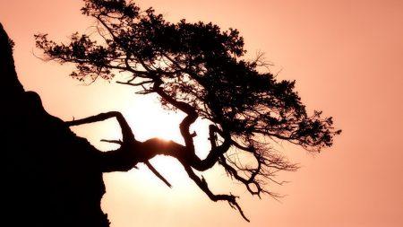 tree, inclination, horizontal