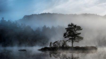 tree, island, reservoir