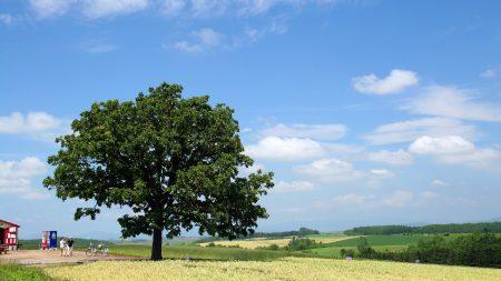 tree, krone, field