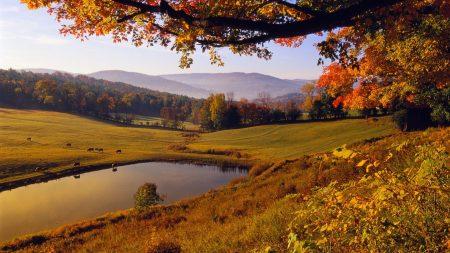 tree, lake, autumn