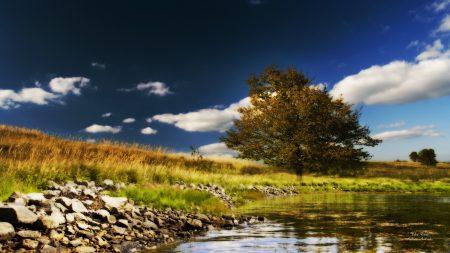 tree, lake, stones