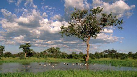 tree, lake, wefts