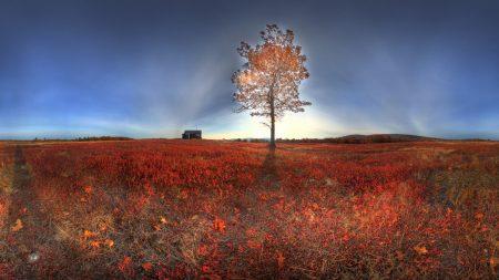 tree, light, autumn