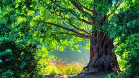 tree, light, colors