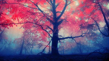 tree, light, nature