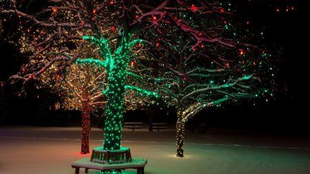 tree, lights, night