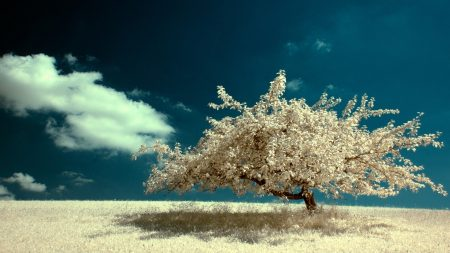 tree, lonely, field