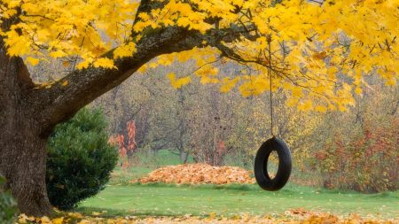 tree, maple, autumn