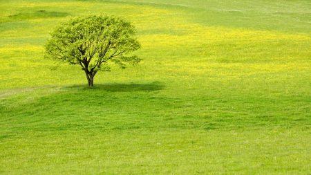 tree, meadow, grass